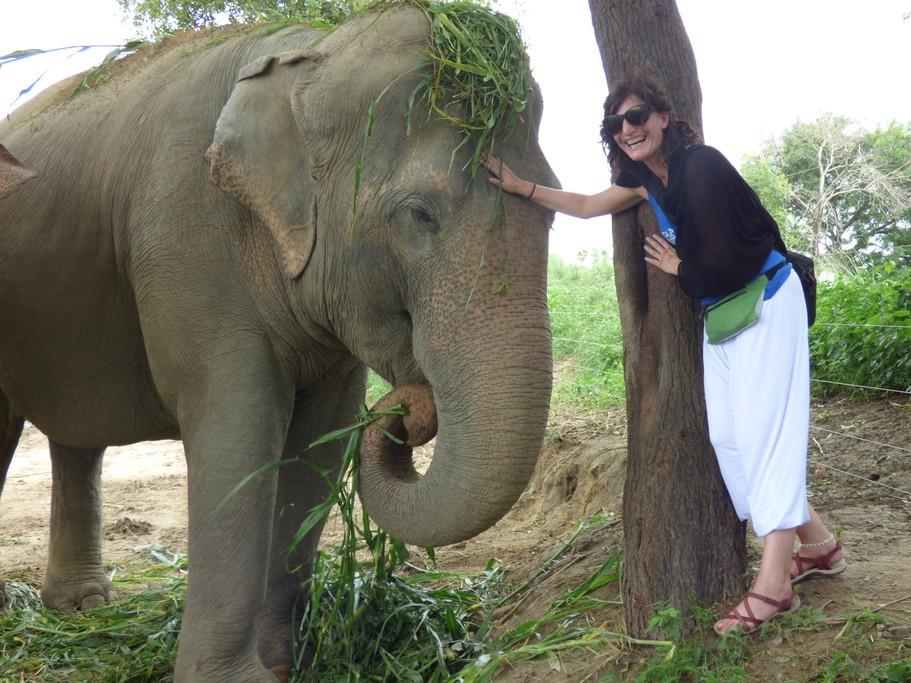 elephant rescue.jpg