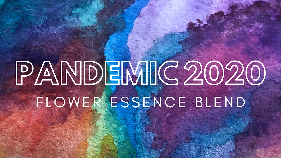 Pandemic 2020 Flower Essence