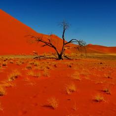 red-dunes.jpg