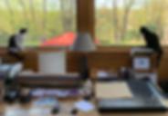 Studio_cats.png