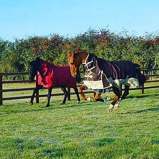 How gorgeous are my two ponies ❤❤ #justj