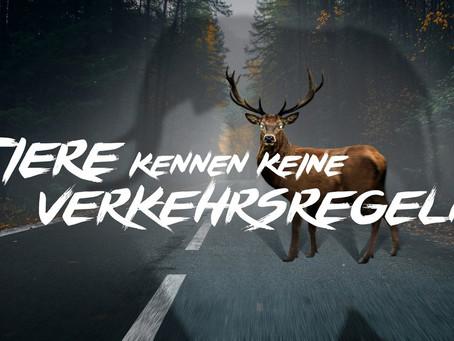 """ACV-Kampagne """"Tiere kennen keine Verkehrsregeln"""""""