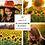 Thumbnail: Sunflower Sunset - Portrait Preset Collection