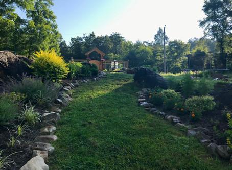 A Morning Walk In The Garden