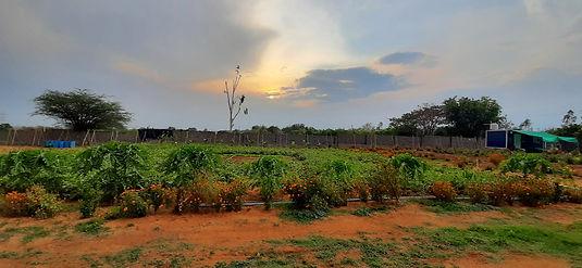 Hyderabad Farm.jpg