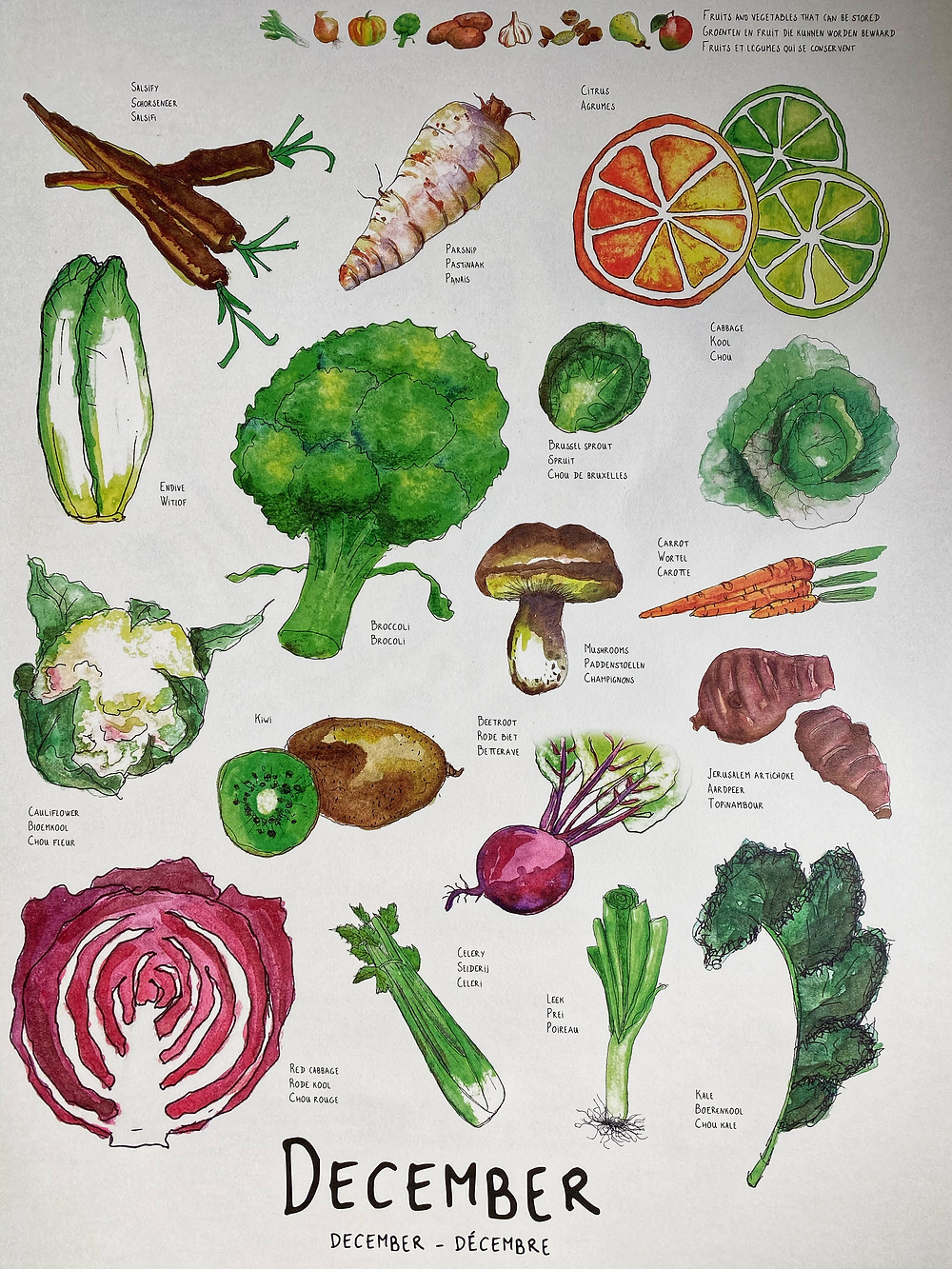 Water colour images of seasonal produce in Central Europe for December. Credit: www.griveau.net