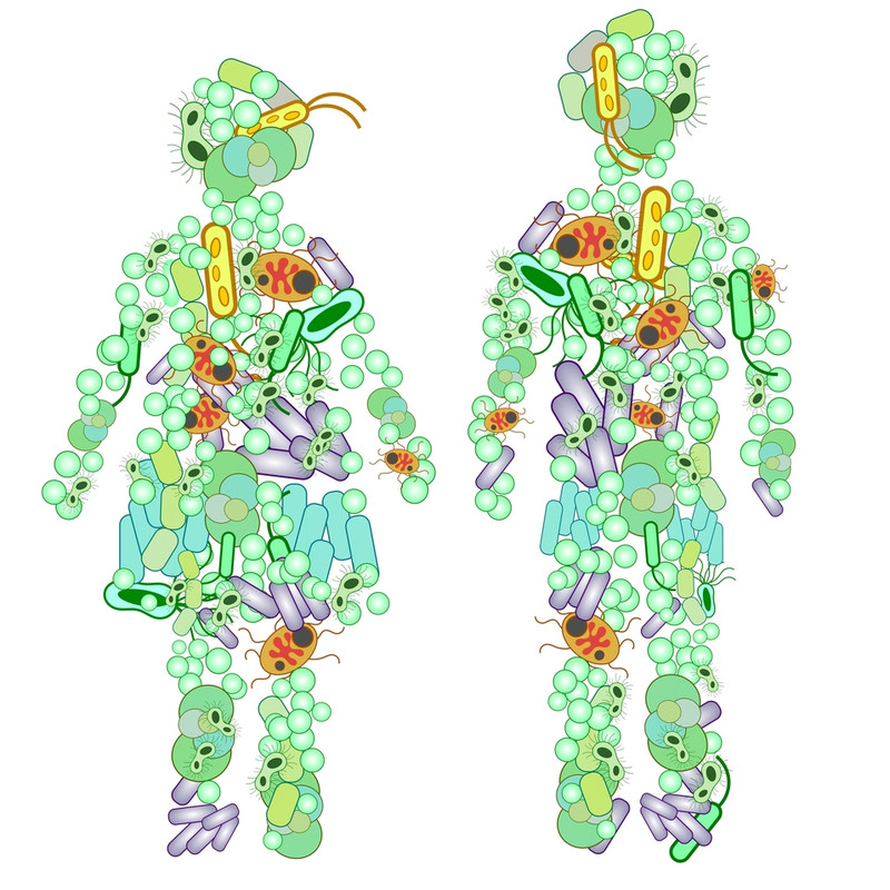 Two human figures and their microbiome