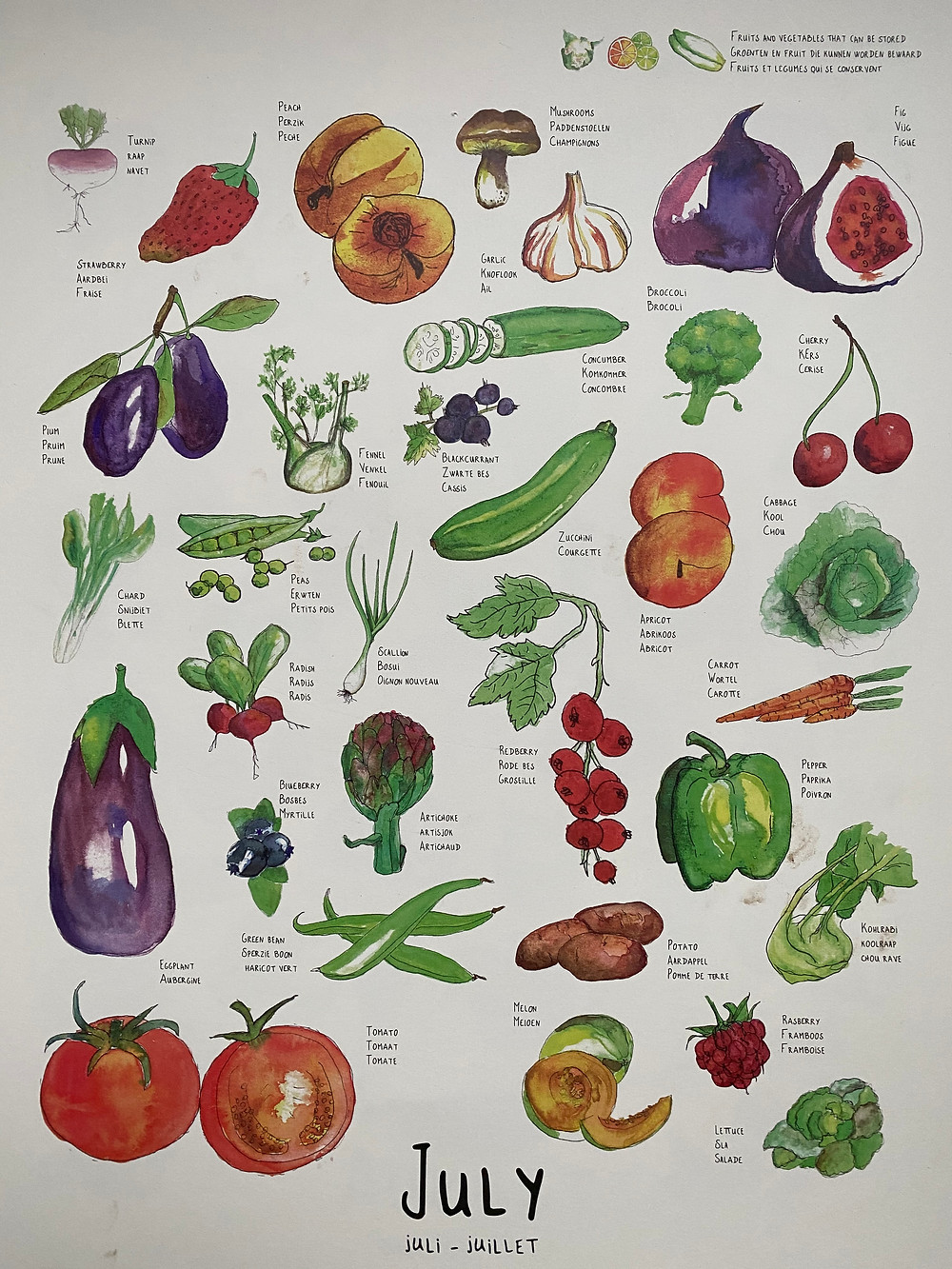 Watercolours images of seasonal produce in Central Europe for July. Credit: www.griveau.net