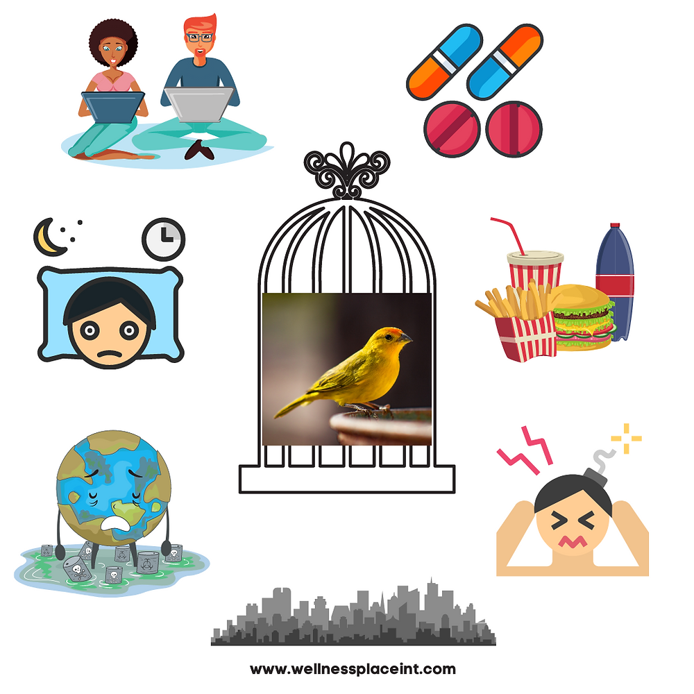 Canary in a modern coalmine infographic describing how toxins in modern world can affect sensitive people. Credit: Nicole Cullinan @wellnessplaceint