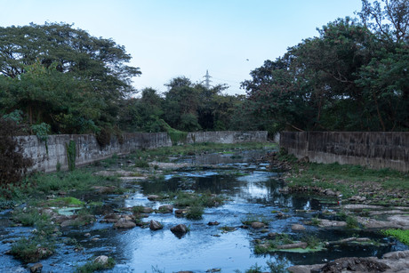 Constructed wetlands could be solution for recycling and reusing wastewater: Expert