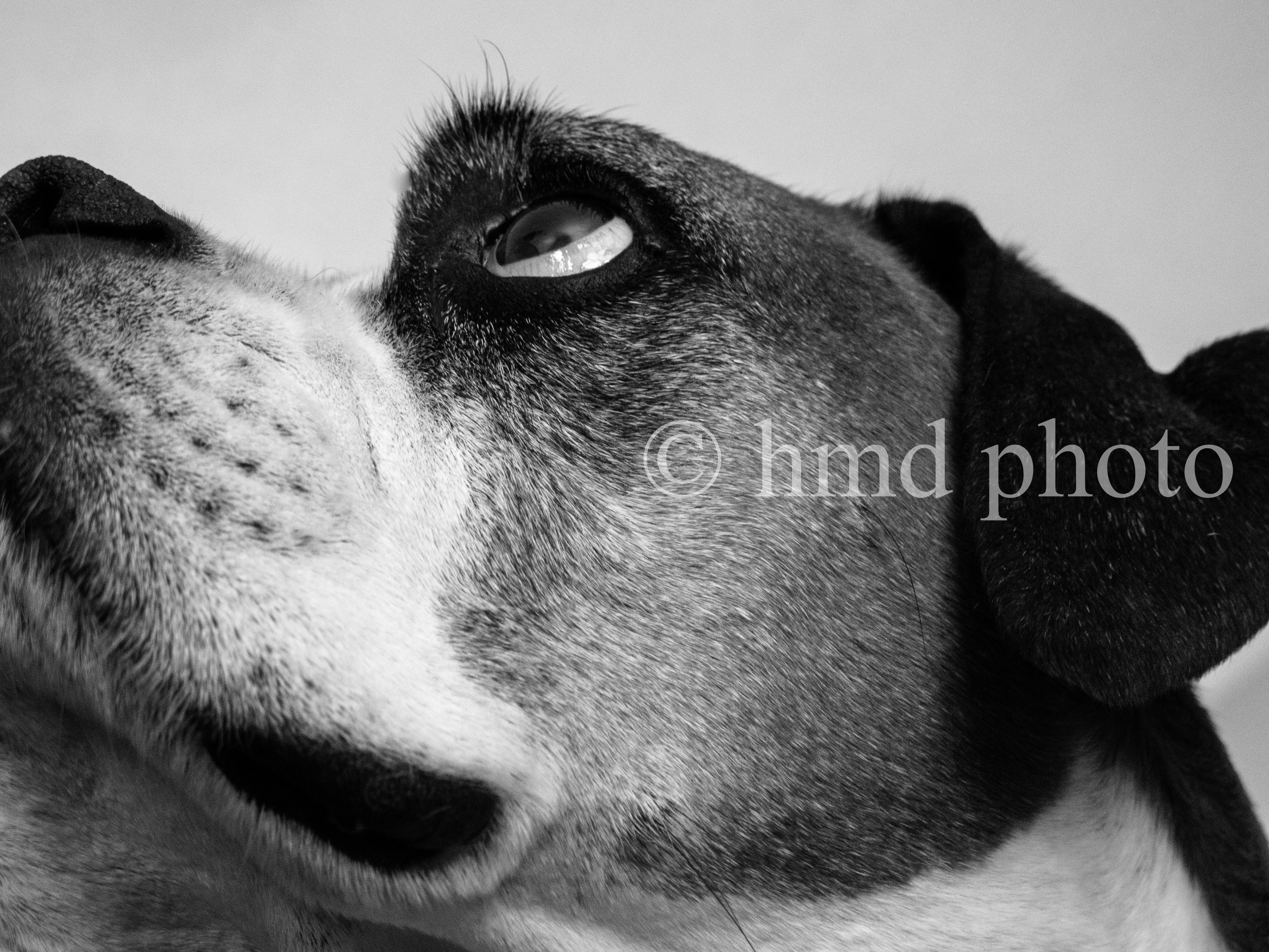 boxer in B&W