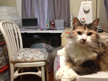 My cat won't let me blog ...