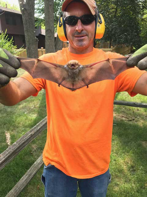 Rescued-bat