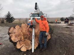 Tree Service for near Atlanta Illino