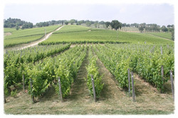 Montefalco Wineries