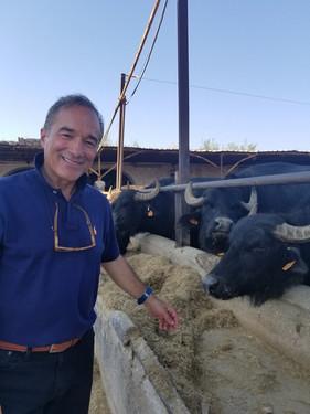 Number one Bufale in Italy -Gargano-.jpg