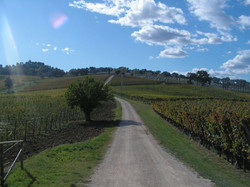 Caprai Winery