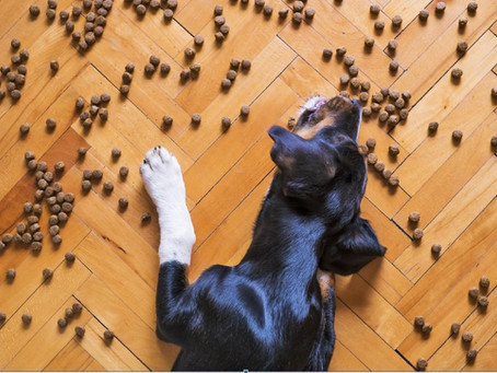 A Guide to Dog Nutrition (Do's & don'ts)