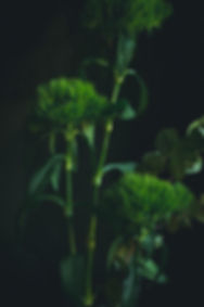 dark mood photography, green leaves close up, flowers