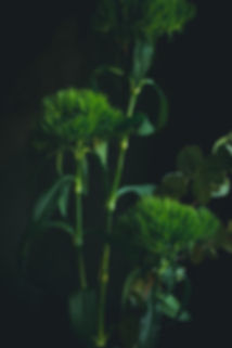 dark mood photography, green flowers, still life