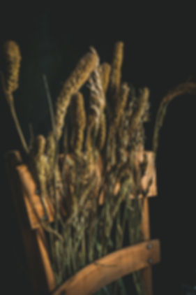 dark mood food photography, dried flowers