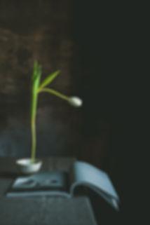 tulip, stilll life