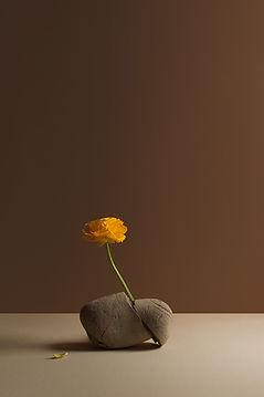 ranuncolo giallo-15077_web.jpg