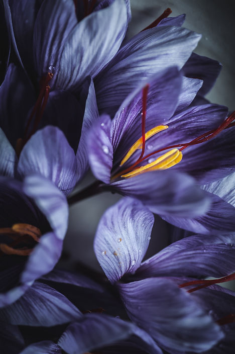 saffron flowers, dark mood photography