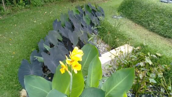 Jardim Filtrante
