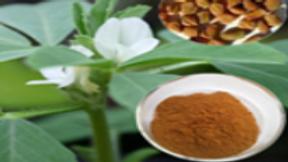 Fenugreek Extract 50 grams