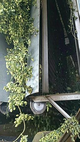 hops5.png
