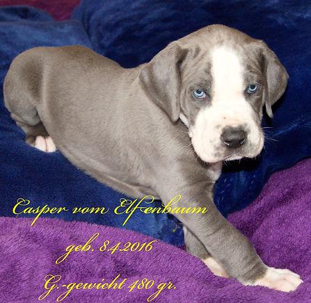 Casper-17.5..jpg