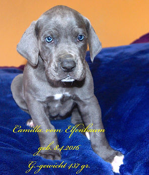 Camilla-17.5..jpg