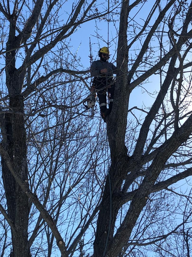 Cam Ellis Arborist Kingston Ontario