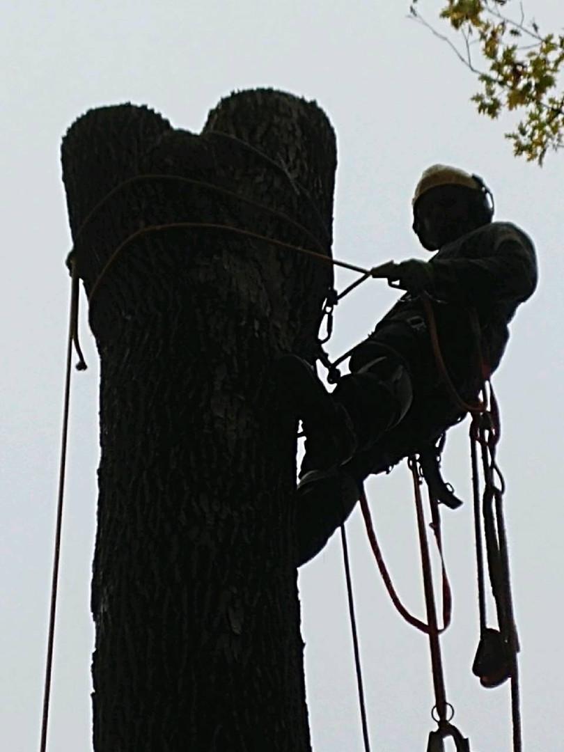 Cam Ellis Arborist Kingston