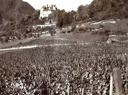VIGNES-Chateau+vignes_1929.jpg