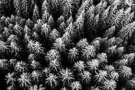 trees-5701989_edited.jpg