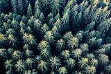 trees-5701989.jpg