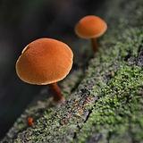 mushroom-3405901-Orange%20Balance_edited