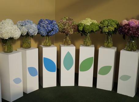 Aromas Farms World Expansion