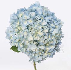 "HYD SUPER PREMIUM BLUE AQUA 8"""