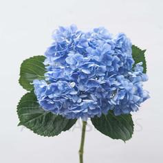 HYD JUMBO BLUE EURO