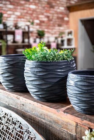 11th June - Alpine Garden Supplies Pot D