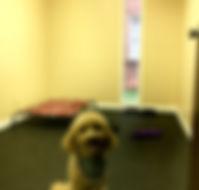 Dog daycare, pet care Montgomery al, dog boarding, dog grooming