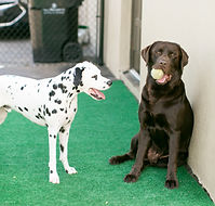Dog daycare, pet care Montgomery al, dog boarding, dog grooming