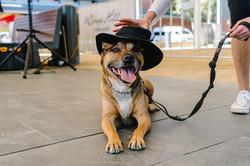 RHTC-DoggyDay-WEB-47