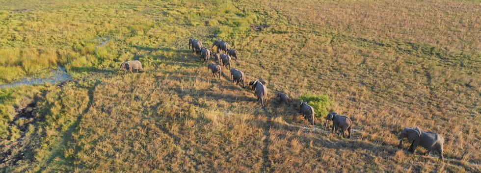 Elephant Parade - Kafue