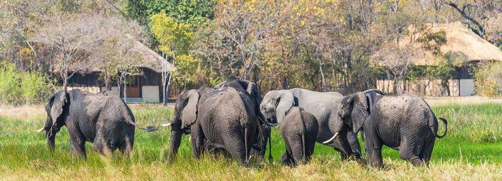 Elephant at Nanhzila
