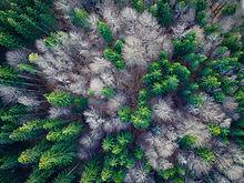aerial-view-1344591.jpg