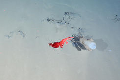 arctic-vent-red-shrimp.adapt.1900.1.jpg